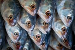 Têtes de poissons (Seb & Jen) Tags: bagan myanmar burma birmanie mandalayregion myanmarbirmanie oldbagan nyaungu royaumedepagan market marche mani sithu