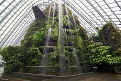 The Falls at Cloud Forest (Karnevil) Tags: asia singapore lioncity downtowncore centralarea centralbusinessdistrict marinabay gardensbythebay marinacentre marinasouth cloudforest dome flowerdome ferns orchids pitcherplant tropical tropicalmontane cloudwalk treetopwalk wideangle wideanglelens 12mm laowa venusoptics sony a7rii a7 rii petekreps