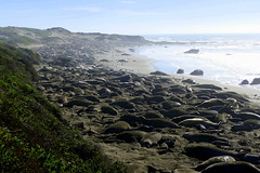 Piedras Blancas Elephant Seal Rookery in San Simeon, California (ivlys) Tags: usa california sansimeon elephantsealrookery tier animal landschaft landscape natur nature ivlys