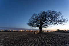 Early Morning (Rob Pitt) Tags: early morning tree wirral cheshire torch oak canon 1740 sony a7rii