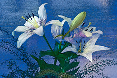 Lilies (evisdotter) Tags: lilies liljor 2in1 textured myart flowers blommor digitaloilpainting cartoon