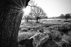February landscape in black and white! (Nina_Ali) Tags: landscape blackandwhite sunflare sunburst monochrome leicester winter2019 backlit backlight moodylandscape atmospheric