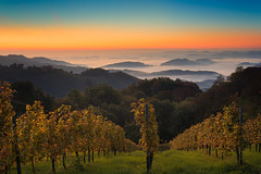 Sunrise in the hills of Styria (Bernhard Sitzwohl) Tags: sunrise vineyard styria outdoor nature landscape fog sun mist