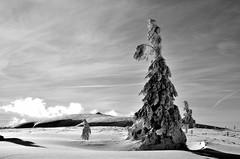 Fantôme d'hiver  -  Winter ghost (Philippe Haumesser (+ 7000 000 view)) Tags: snow arbres tree trees hiver winter sky paysages landscape landscapes vosges nikond7000 d7000 nikon reflex 2019 neige arbre paysage ciel nuages clouds noiretblanc blackandwhite monochrome