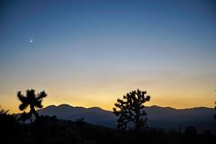 Mojave Warmth. (Ryan Hallock) Tags: rhallock ryanhallock canonlens sonyalpha sonya7canon24105l usinterior nationalpark nature gorgeous mountains beauty outside outdoors mtsanjacinto joshuatree yuccavalleycalifornia mojavedesert sunset