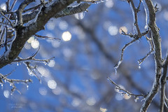 icy bokeh (mariola aga) Tags: winter tree branches ice frozen closeup light sunlight bokeh sky blue nature coth coth5