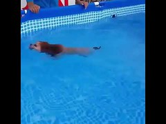 Dog or Lion Swimming? - Cute Animals Moment (tipiboogor1984) Tags: aww cute cat funny dog youtube