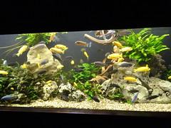rhenen_2_027 (OurTravelPics.com) Tags: rhenen fish aquarium ouwehands dierenpark zoo