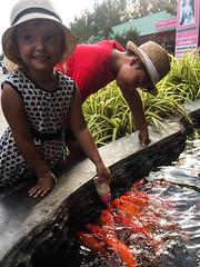 Poissons goulus (Bruno-Edouard Perrin) Tags: chapeau biberon simon poissons temple esther tambonbangkaeo changwatchachoengsao thaïlande th