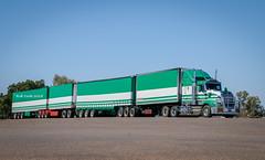 Scarcella KW Quad (Rob 1976) Tags: australiantrucks australia kenworth bonnettedkenworth kw roadtrain roadtrains scarcellatransport camooweal northwesternqueensland qld queensland trucks