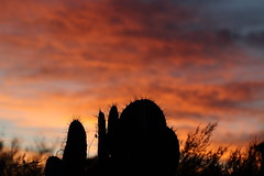 Sunset 2 16 19 #31 (Az Skies Photography) Tags: rio rico arizona az riorico rioricoaz canon eos 80d canoneos80d eos80d canon80d cloud clouds red orange yellow gold golden salmon black february 2019 sky skyline skyscape arizonasky arizonaskyline arizonaskyscape sun set sunset dusk twilight nightfall arizonasunset 16 february162019 21619 2162019 silhouette cactus prickly pear pricklypear pricklypearcactus cactussilhouette