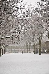 trees covered in snow (theharv58) Tags: lightsnow lightweather subway eatonscentre tunneloverqueenstreet peoplewalkinginthesnow skatingatcityhall celebratingsnow subwayart snow canoneos6dmarkii canonef2470mmf4lisusm winterphotography toronto torontocanada copsnearkopsrecords