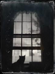 Windowpane (Creepella Gruesome) Tags: gomez animal feline cat tuxedocat silhouette window blackandwhite blur spooky dark mysterious phantasm iphone6splus hipstamatic
