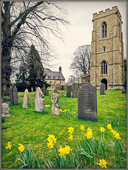 St.Mary the Virgin, Welford (Jason 87030) Tags: church holy religion construction yard graves stone stones northants northamptonhire daventry district yellow flowers daffs daffodils march 2019 tree branches trunk naked bare uk england village unitedkingdom greatbritain
