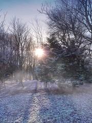 The magical Forrest..... (Paul McF-Photography) Tags: mist winter scotland amateurphotographer landscape mobiography shotoniphone shotoniphonexsmax