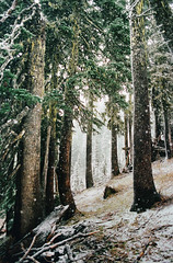 hush (manyfires) Tags: nikonf100 35mm analog film landscape mtrainier mtrainiernationalpark hike hiking trees forest grove storm snow winter trail path hush pnw pacificnorthwest