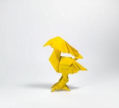 The Yellow Bird - designed by Satoshi Kamiya (Nguyễn Tuấn Tài) Tags: