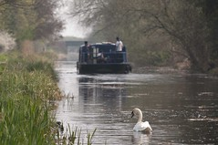 Leaving us behind (dwimagesolutions) Tags: england essex maldon chelmerblackwaternavigation swan narrowboat nikon d300zoom nikkor 70300mm vr f4556