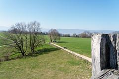 Mont Vully (Bephep2010) Tags: 2019 7markiii alpha baum berg freiburg fribourg frühling ilce7m3 montvully sel24105g schweiz sony switzerland mountain oppidum spring tree ⍺7iii sugiez kantonfreiburg ch