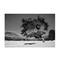 Winter (Maria Zaharieva) Tags: black white blackandwhite bw mono monochrome contrast shadows highlights landscape nature winter snow cold tree mountain intothewild intothemountains wild explore observe travel adventure bulgaria