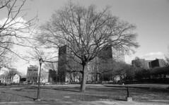 Commodore Barry Park (neilsonabeel) Tags: nikonfe2 nikon nikkor 24mm film analogue brooklyn newyorkcity park