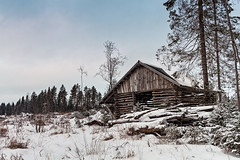 Old Shed By The Forest (k009034) Tags: 500px wooden copy space europe finland pyhäjoki scandinavia tranquil scene beach branches building cold countryside exterior forest frost nature no people nordic countries north old rural scenic sea shed shore sky snow timber trees winter wood teamcanon copyspace tranquilscene nopeople nordiccountries