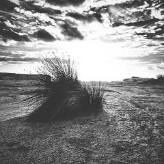 Cliff top (StephEvaPhoto) Tags: ifttt instagram instagramapp square squareformat iphoneography iphone7plus iphone iphonex