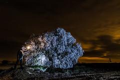 Iluminando... (Yorch Seif) Tags: noche night nocturna nocturnal lightpainting longexposure largaexposicion estrellas stars d7500 tokina1116
