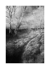 headway (vuzephotography.co.uk) Tags: gardomsedge peakdistrict infrared ir