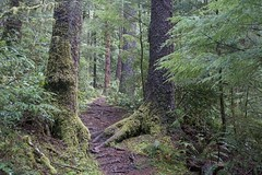 Follow me... (Mary Ann Whitney-Hall) Tags: oregon oldgrowth forest cape perpetua gywn creek trail hiking coastal