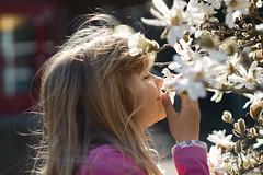 can you smell spring? (ivoräber) Tags: sony switzerland schweiz swiss systemkamera spring suisse flower blossom magnolia magnolien helios helios442