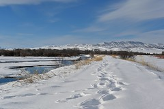 Tracks (l i v e l t r a) Tags: z6 nikkor f10 58mm threeforks montana tracks snow river blue sky open nature