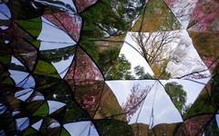 Magnolia Mirrors SI 30 (Rob G Ski) Tags: abstract da40mmxs kaleidoscope lewisginterbotanicalgardens spring