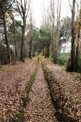 Acequia (ivanxu17) Tags: distance long paisaje lejanía distancia nice leaves autum o winter invierno otoño green verde hojas bosque naturaleza nature water agua canal acequia