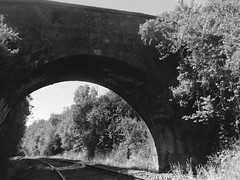 Bridge and Rails, Black and White (naoryvi17) Tags: puente chile san javier valdivia tren riel naturaleza viaje black white train travel bridge