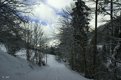 Magical winterworld (Greet N.) Tags: silbertal mountains snow forest clouds trees
