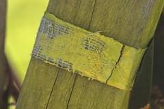 Paint Undone (adamopal) Tags: canon canon7d canon7dmkii canon7dmarkii paintundone peeledandweathered peeledpaint peelingpaint peeling paint oldpaint weathered weatheredwood wood macro macro100mm 100mm yellow white brown grey