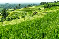 Wandering in Ubud
