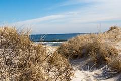 Dunes and Surf (wanderlust octopus) Tags: 2019 atlanticocean conservation dunegrass dunepreservation dunes environment february islandbeachstatepark jerseybeach jerseyshore naturalhabits newjersey parks winter beach
