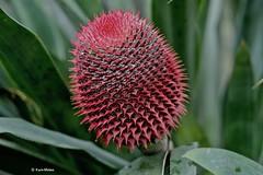 EN8A5065 (Karin Michies) Tags: botanischetuinen botanischetuinenutrecht universiteitutrecht utrechtuniversity botanicalgardens bloemen flowers natuur nature