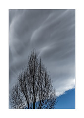 tree painting (Armin Fuchs) Tags: arminfuchs tree sky clouds blue gray grey diagonal light waves spring niftyfifty fineart