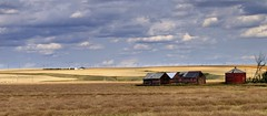 Prairie panorama with bandoned farm buildings - Starland County, near Drumheller, Alberta. (edk7) Tags: nikond60 edk7 2008 canada alberta starlandcounty neardrumheller farm field crop sky cloud rural countryside country landscape abandoned derelict ruin barn silo shed ranch prairie panorama vista rusty rust