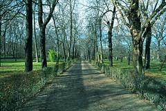 CAMINO (ALEJANDRO DELGADO (Chano38)) Tags: roja nature naturaleza parquedeelretiro arboles tree camino forest park madrid nikon nikon750