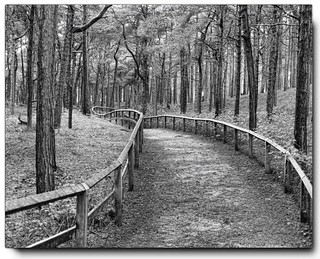 Fomby Woods.........