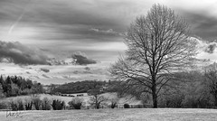 Shades of Grey (PhilR1000) Tags: greyscourt nationaltrust landscape bw monochrome blackwhite chilterns