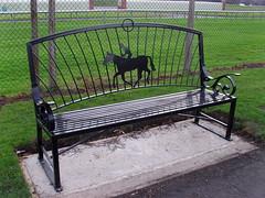 Racecourse Horse (Glass Horse 2017) Tags: bench benchmonday publicart painted black metal image horse redcarracecourse cleveland redcar