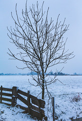 Bare tree (EpicIvo) Tags: ifttt 500px winter tree outdoors snow filmic branches fence the netherlands middendelfland meadow morning nature water sky overcast