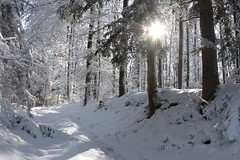 Winter Wonderland (qaxwkhlm1) Tags: bäume trees forest wood saison season bayern bavaria canon sun snow winter winterwonderland