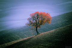 La natura, nella sua spettacolarità, ci insegna la forza di vivere. Dovunque. (alfapegaso) Tags: toscana