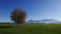 Herbst Hochfelln Hochgern (Aah-Yeah) Tags: herbst autumn übersee achental chiemgau bayern sonne sun hochlerch hochgern hochfelln